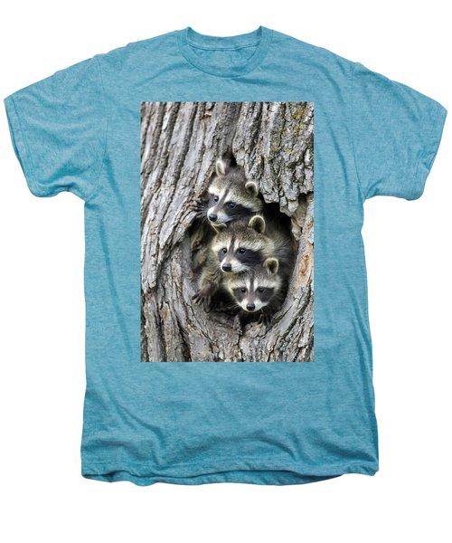 Raccoon Trio At Den Minnesota Men's Premium T-Shirt by Jurgen & Christine Sohns
