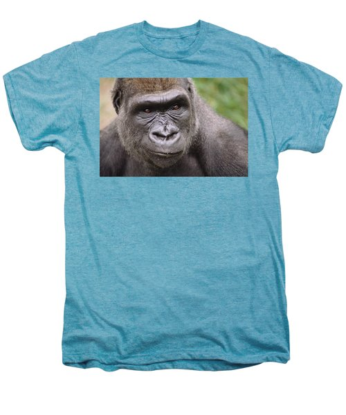 Western Lowland Gorilla Young Male Men's Premium T-Shirt by Gerry Ellis