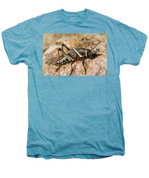 A Colorful Lubber Grasshopper Men's Premium T-Shirt by Jack Goldfarb