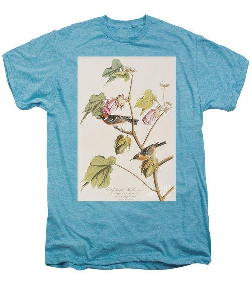 Bay Breasted Warbler Men's Premium T-Shirt by John James Audubon
