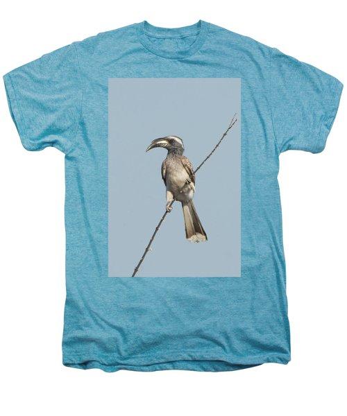 African Grey Hornbill Tockus Nasutus Men's Premium T-Shirt by Panoramic Images