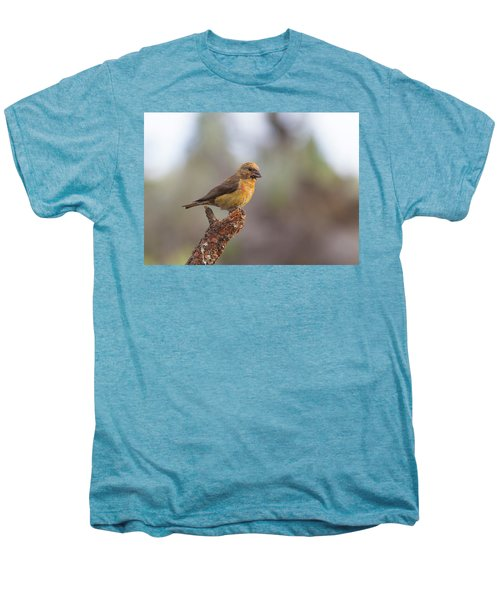 Juvenile Male Red Crossbill Men's Premium T-Shirt by Doug Lloyd