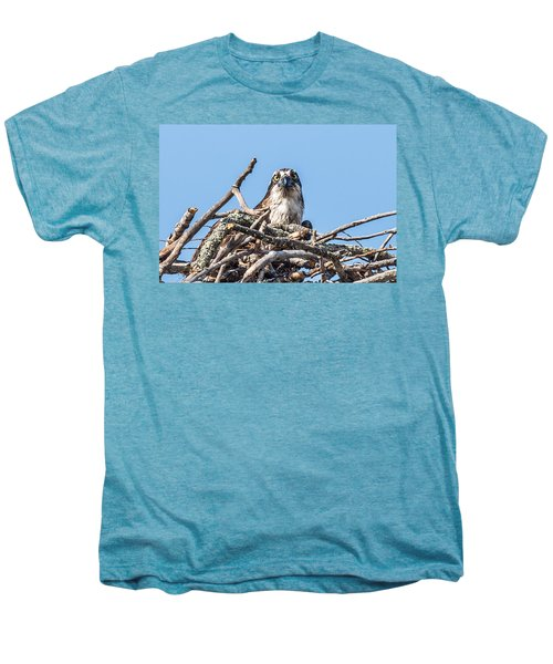 Osprey Eyes Men's Premium T-Shirt by Paul Freidlund