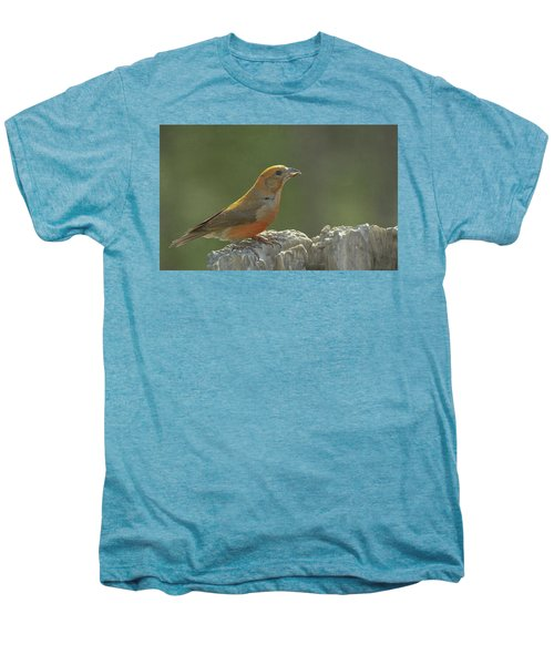 Red Crossbill Men's Premium T-Shirt by Constance Puttkemery