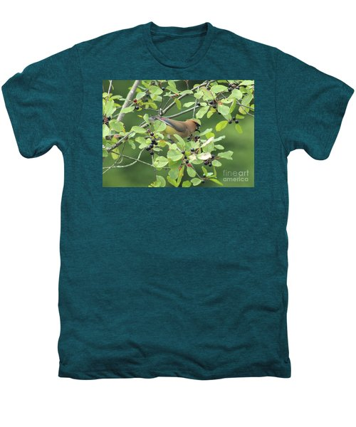 Cedar Waxwing Eating Berries Men's Premium T-Shirt by Maili Page