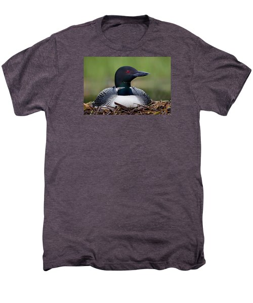 Common Loon On Nest British Columbia Men's Premium T-Shirt by Connor Stefanison