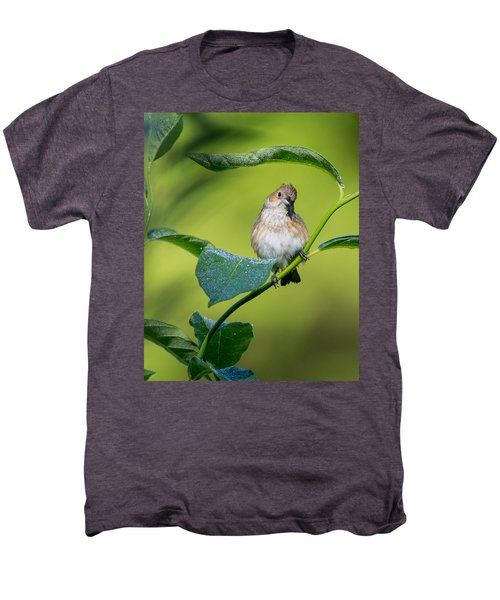 Indigo Bunting Female Men's Premium T-Shirt by Bill Wakeley
