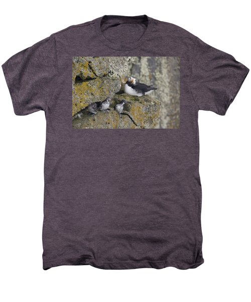 Least Auklets Perched On A Narrow Ledge Men's Premium T-Shirt by Milo Burcham