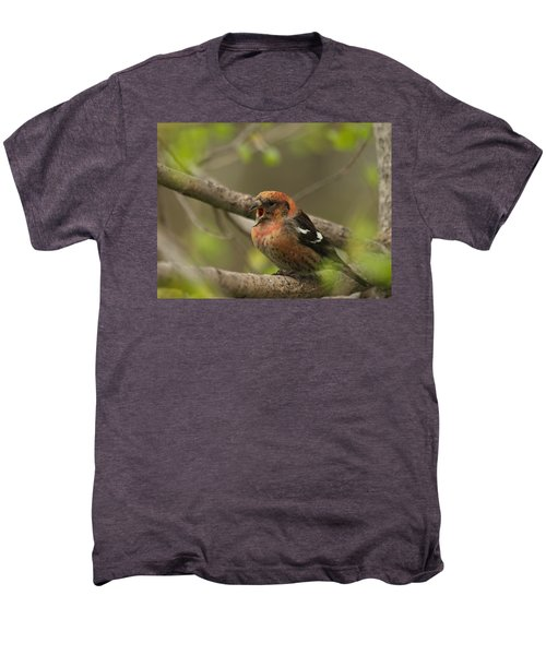 White-winged Crossbill Men's Premium T-Shirt by James Peterson