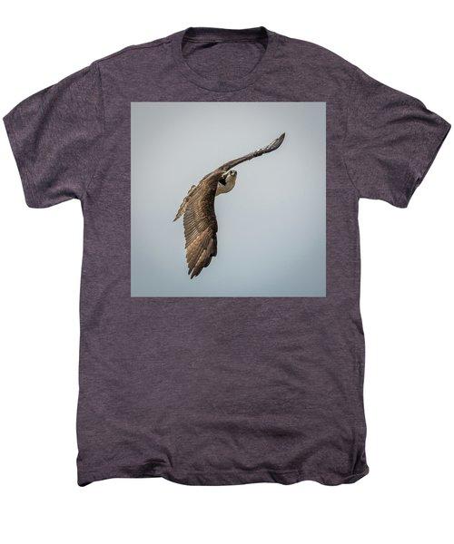 Osprey In Flight Men's Premium T-Shirt by Paul Freidlund