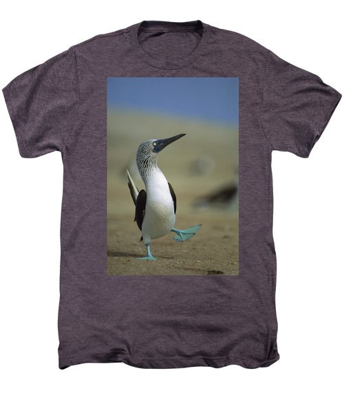 Blue-footed Booby Sula Nebouxii Men's Premium T-Shirt by Tui De Roy