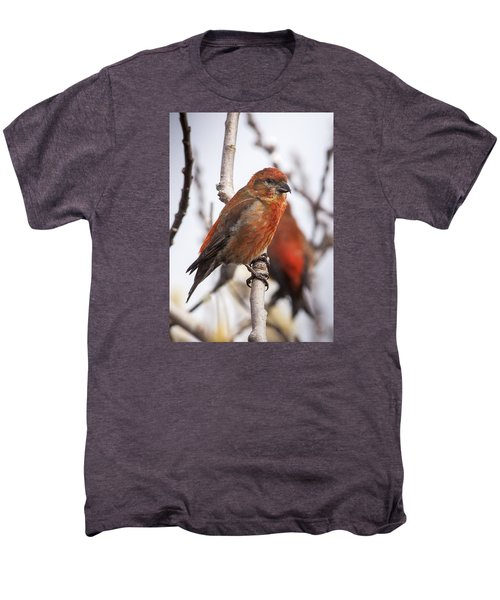 Male Red Crossbills Men's Premium T-Shirt by Robert Potts