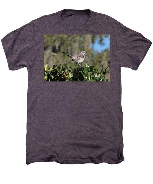 Northern Mockingbird Men's Premium T-Shirt by Carol Groenen
