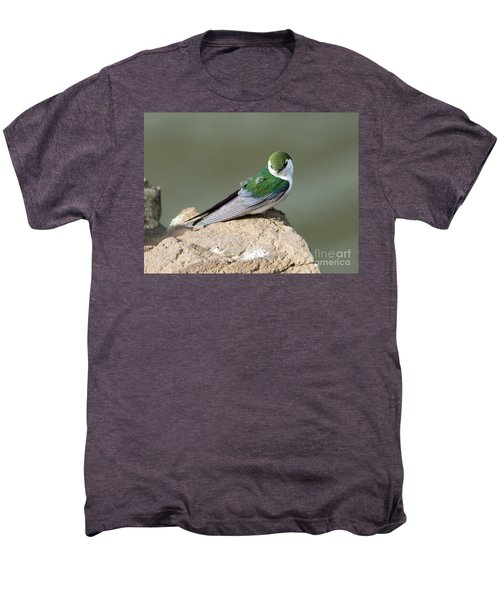 Violet-green Swallow Men's Premium T-Shirt by Mike Dawson