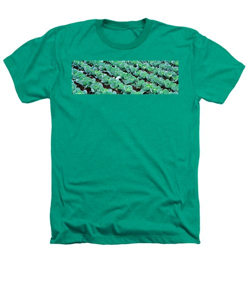 Cabbage, Yamhill Co, Oregon, Usa Heathers T-Shirt by Panoramic Images