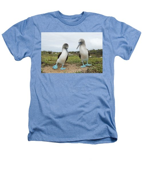 Blue-footed Booby Pair Courting Heathers T-Shirt by Tui De Roy