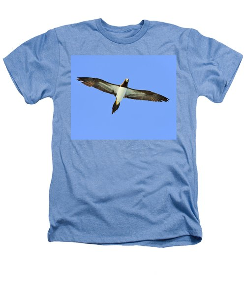 Brown Booby Heathers T-Shirt by Tony Beck