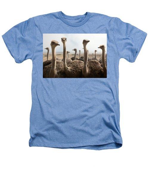 Ostrich Heads Heathers T-Shirt by Johan Swanepoel
