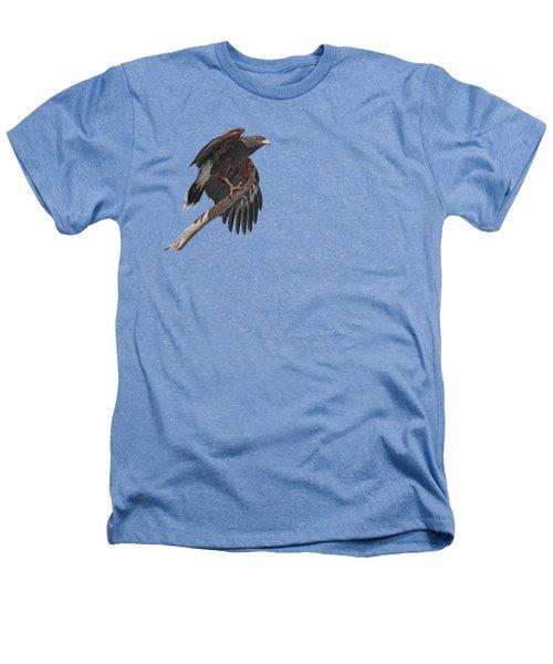 Harris Hawk - Transparent 2 Heathers T-Shirt by Nikolyn McDonald