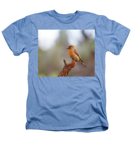 Male Red Crossbill Heathers T-Shirt by Doug Lloyd