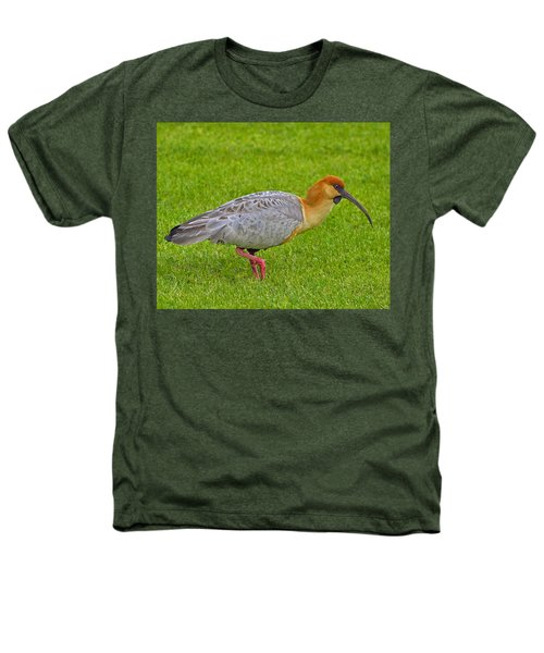 Black-faced Ibis Heathers T-Shirt by Tony Beck