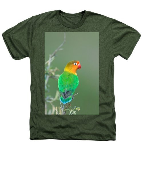 Close-up Of A Fischers Lovebird Heathers T-Shirt by Panoramic Images