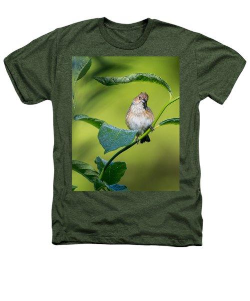 Indigo Bunting Female Heathers T-Shirt by Bill Wakeley