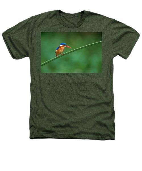 Malachite Kingfisher Tanzania Africa Heathers T-Shirt by Panoramic Images