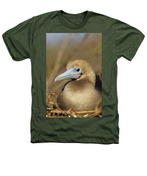 Red-footed Booby Incubating Eggs Heathers T-Shirt by Tui De Roy