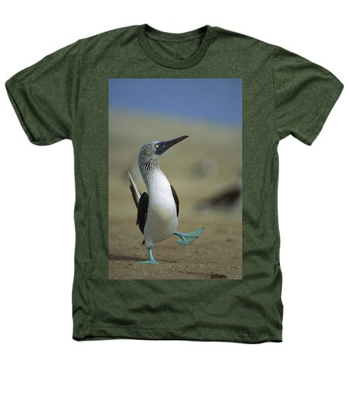 Blue-footed Booby Sula Nebouxii Heathers T-Shirt by Tui De Roy