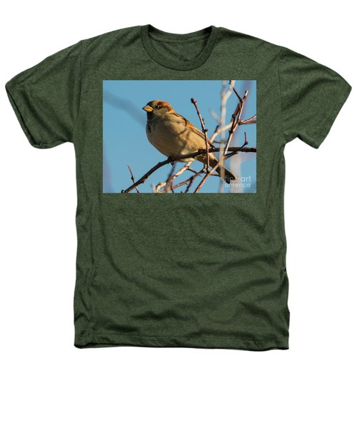Female House Sparrow Heathers T-Shirt by Mike Dawson