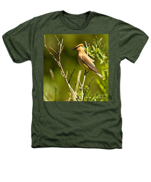 Perfectly Perched Heathers T-Shirt by Adam Jewell