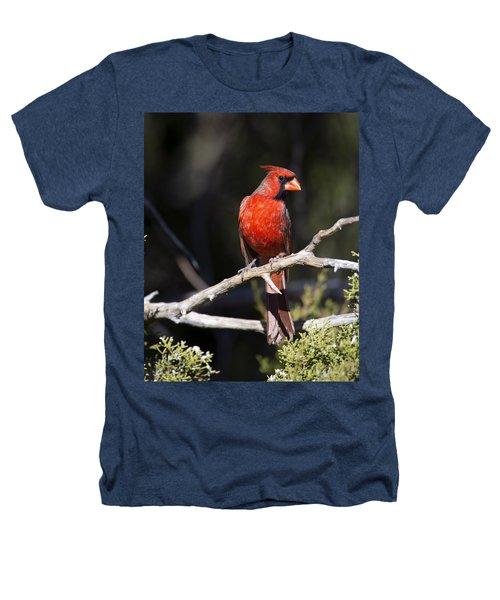 Male Northern Cardinal Heathers T-Shirt by Gary Langley