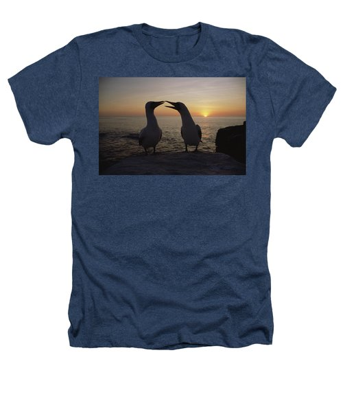 Masked Booby Couple Courting Galapagos Heathers T-Shirt by Konrad Wothe