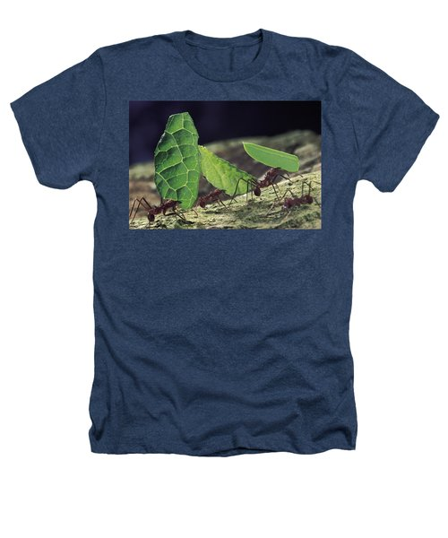 Leafcutter Ant Atta Cephalotes Workers Heathers T-Shirt by Mark Moffett