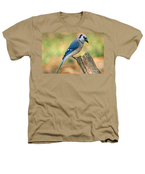 Blue Jay Heathers T-Shirt by Millard H. Sharp