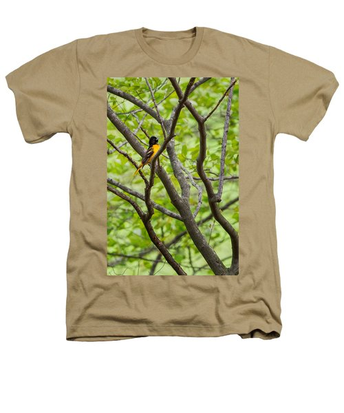 Baltimore Oriole Heathers T-Shirt by Bill Wakeley