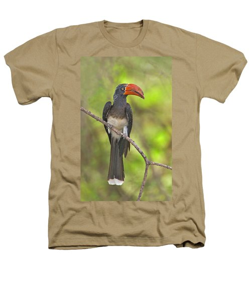 Crowned Hornbill Perching On A Branch Heathers T-Shirt by Panoramic Images