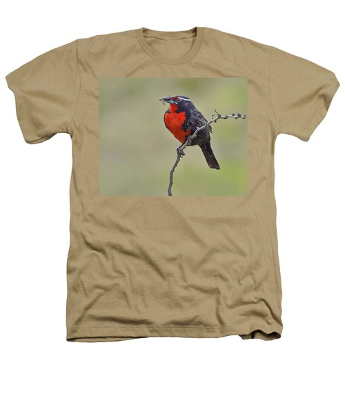 Long-tailed Meadowlark Heathers T-Shirt by Tony Beck