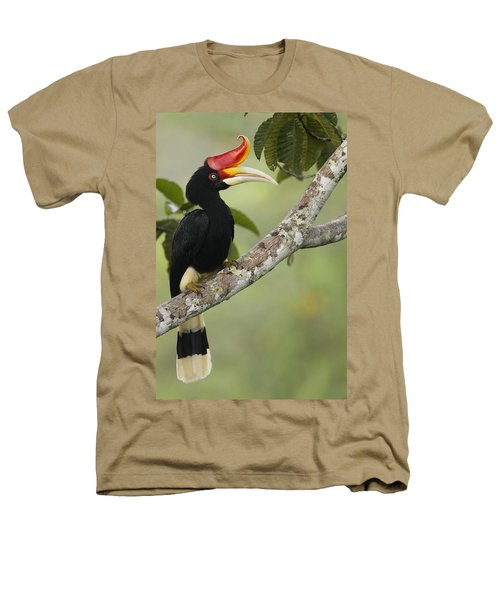 Rhinoceros Hornbill Female Sepilok Heathers T-Shirt by Sebastian Kennerknecht