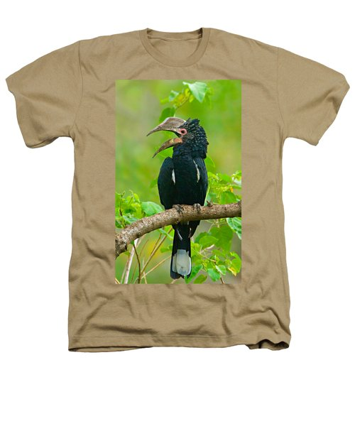 Silvery-cheeked Hornbill Perching Heathers T-Shirt by Panoramic Images