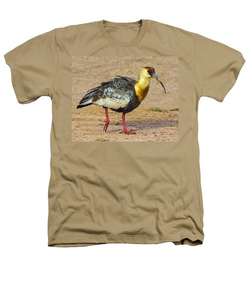 Buff-necked Ibis Heathers T-Shirt by Tony Beck