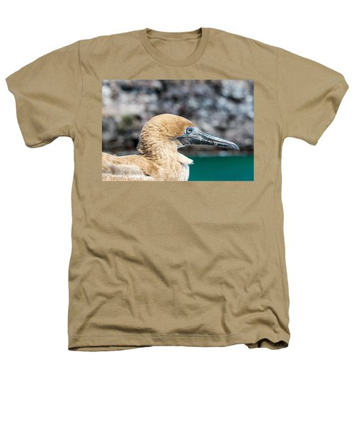 Red Footed Booby Juvenile Heathers T-Shirt by Jess Kraft