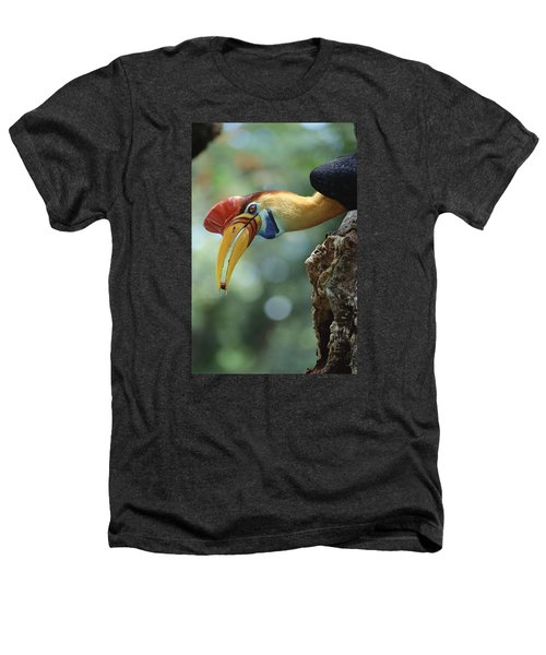 Sulawesi Red-knobbed Hornbill Male Heathers T-Shirt by Tui De Roy