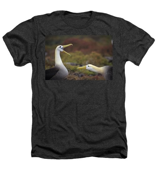 Waved Albatross Courtship Display Heathers T-Shirt by Tui De Roy