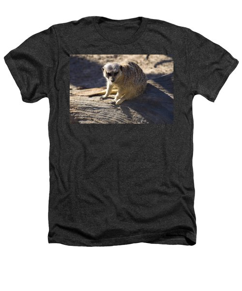Meerkat Resting On A Rock Heathers T-Shirt by Chris Flees