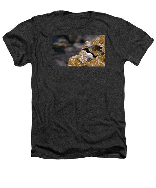 Razorbill Bird Heathers T-Shirt by Dreamland Media