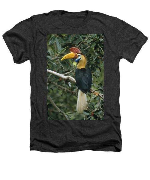 Sulawesi Red-knobbed Hornbill Male Heathers T-Shirt by Mark Jones