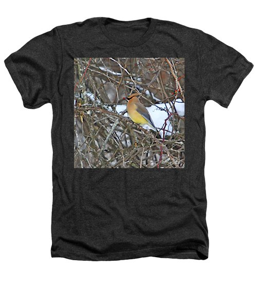 Cedar Wax Wing Heathers T-Shirt by Robert Pearson