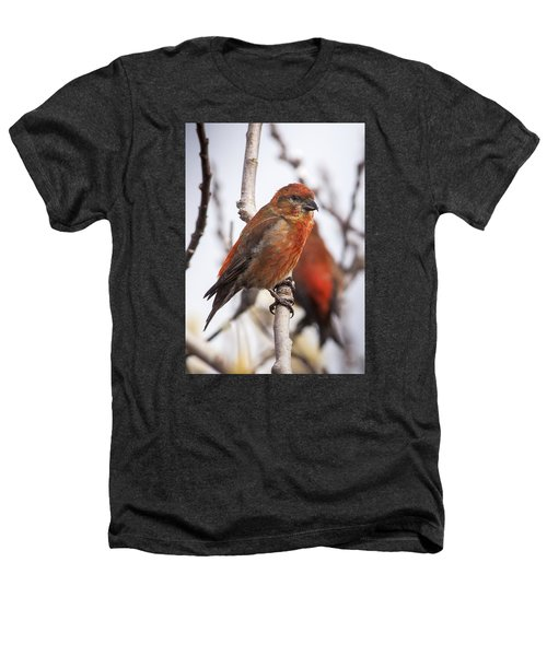 Male Red Crossbills Heathers T-Shirt by Robert Potts